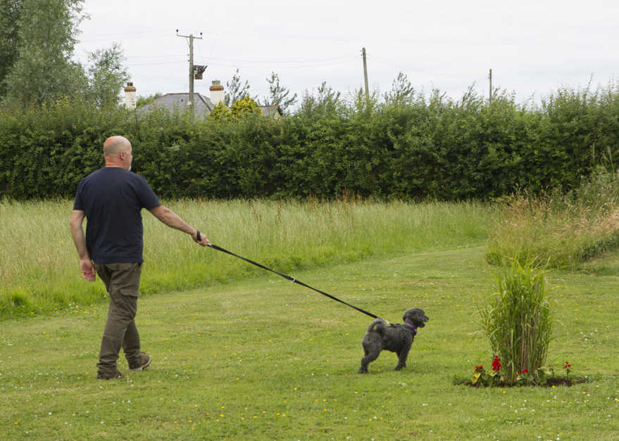 Withy Water Dog Friendly Camping
